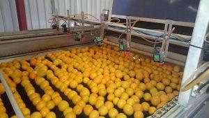 PanoramaPics-Oranges