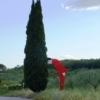 C:\Users\Adriana\AppData\Local\Microsoft\Windows\Temporary Internet Files\Content.Word\Toscana 14 104.jpg